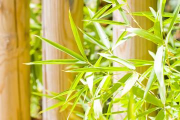 hojas de bambu