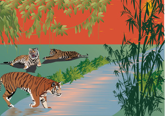 Poster Forest animals three tigers near river in forest