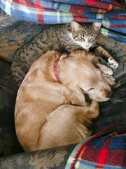 Perra y gata durmiendo juntas