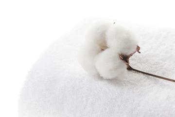 コットン cotton