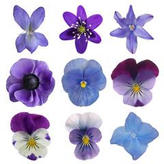 Collectie van blauwe bloemen