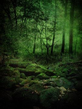 Midnight Woods Misteries