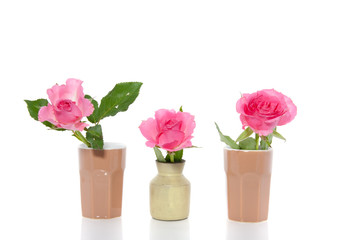 three little vases with pink roses isolated over white