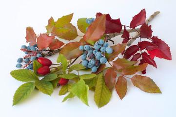 Obst Blumen Blätter-Stilleben 3582