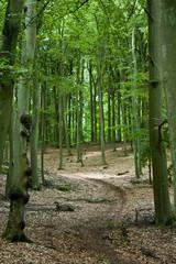Waldweg Hochformat