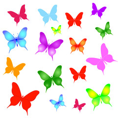 set of different butterflies - vector