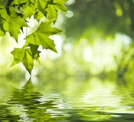 Reflet de feuilles vertes dans l'eau - vert saturé et doux