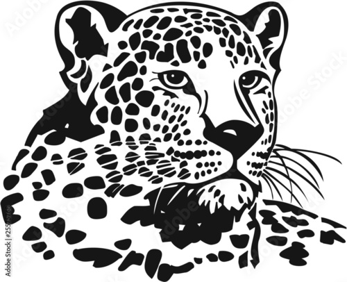 leopard vinyl ready vector illustration stock image and royalty free vector files on fotolia. Black Bedroom Furniture Sets. Home Design Ideas