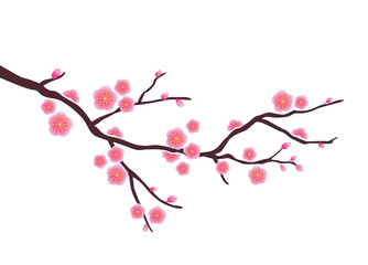 Cherry blossom in vector format