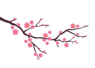 Cherry blossom in vector format