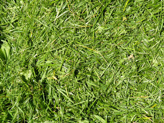 fresh cutted grass
