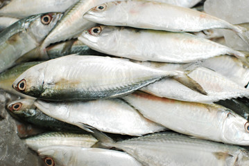 Group of Fresh fish