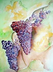 Weintrauben1