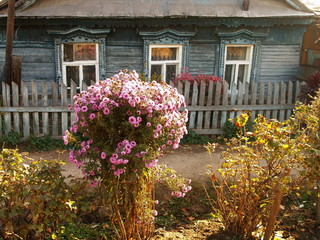 Wall Mural - An old village house with a flower garden in autumn