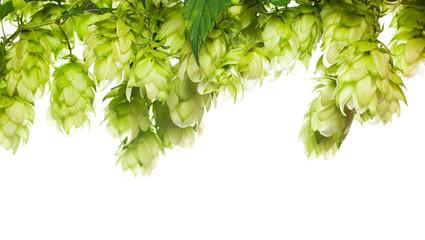green fresh hop border isolated on white