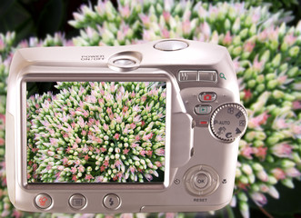Image inflorescences orpin screen camera.