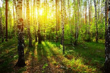 Keuken foto achterwand Berkbosje Forest