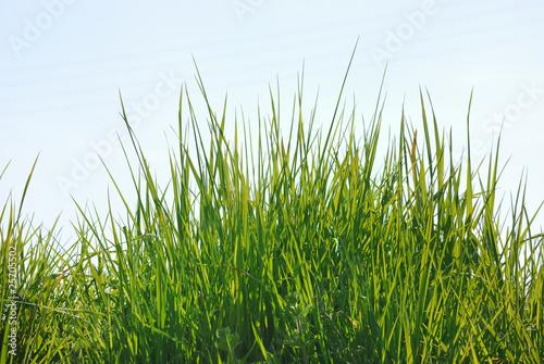 Herbes hautes sur un talus photo libre de droits sur la for Haute herbe pokemon