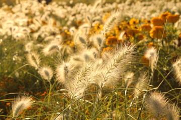 Blumenmeer weiß 3