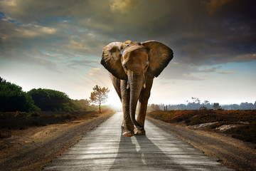 Deurstickers Olifant Walking Elephant