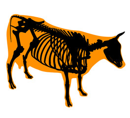 Cow skeleton and body