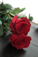 Isolated beautiful red roses on black background