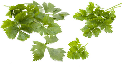 leaves of parsley and celery