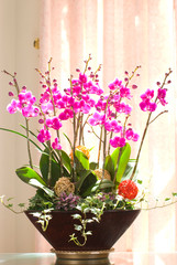 Pink orchids group in a flowerpot