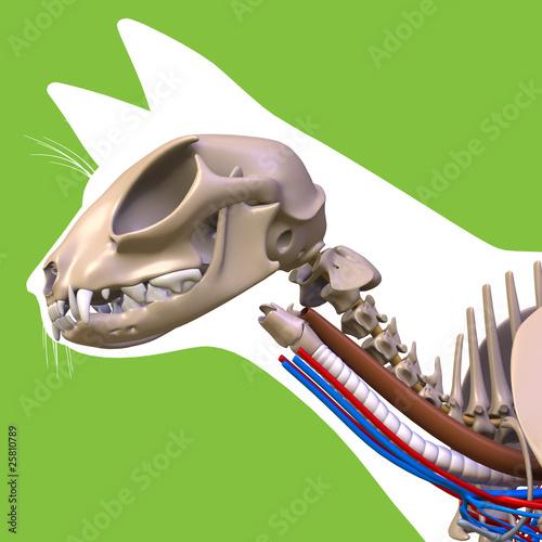 cat head anatomy\