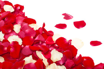 red and white rose petals isolated on white