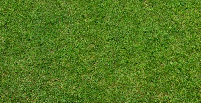 Canadian grass texture