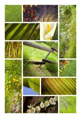 Wall Mural - Nature écologie campagne été verdure