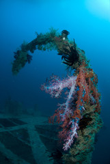 Coral growth on the Rosalie Moller shipwreck