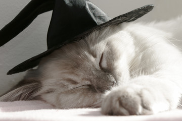 cat in a witches hat