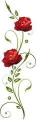 Blumen, Blüten, Rose, rote Rosen, filigran, floral