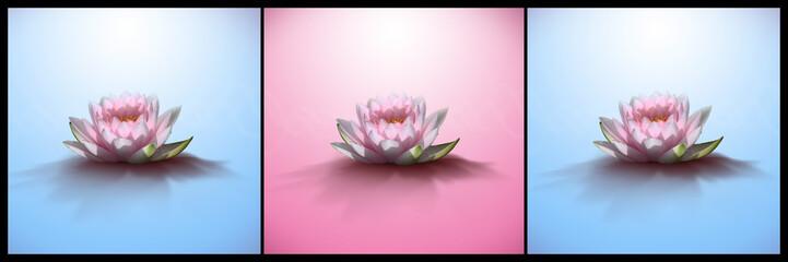 Photos illustrations et vid os de fleur de lotus - Image fleur de lotus ...
