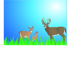 Poster Forest animals Cerf