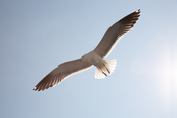 Sea seagull against the sky