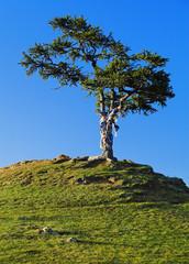 Tree of desires on Olkhon Island on Lake Baikal, Russia