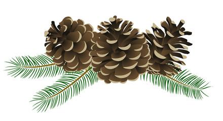 松かさ (conifer cone)