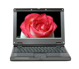 laptop with red rose on screen