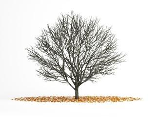 tree winter