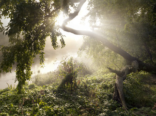 The light in the misty morning