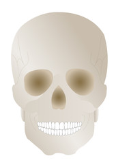 Vector illustration a human skull with earl by a holiday hallowe
