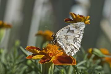 Mariposa sobre una flor.