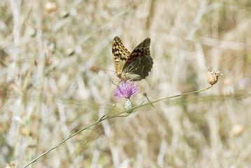 Mariposa en su medio ambiente.