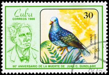 CUBA - CIRCA 1986 Quail-dove