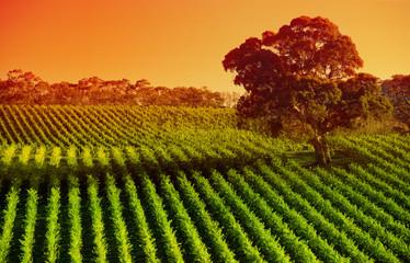 Fototapete - Afternoon Vines