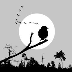 illustration of the bird on branch