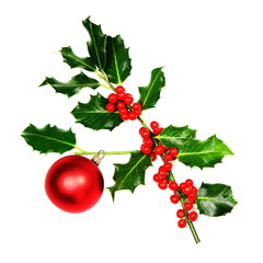 Sprig of Christmas Holly over white